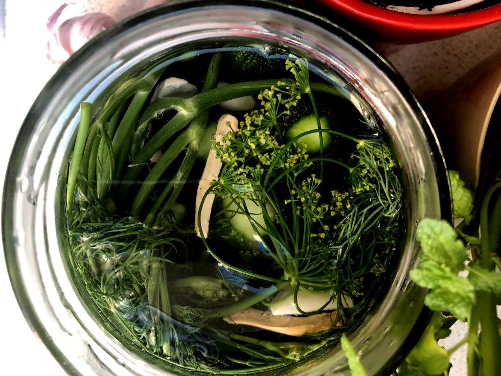 Shortly half sour cucumbers in a jar