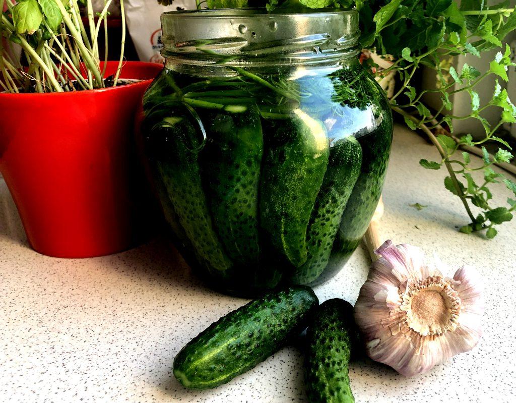 Half sour cucumbers in a jar