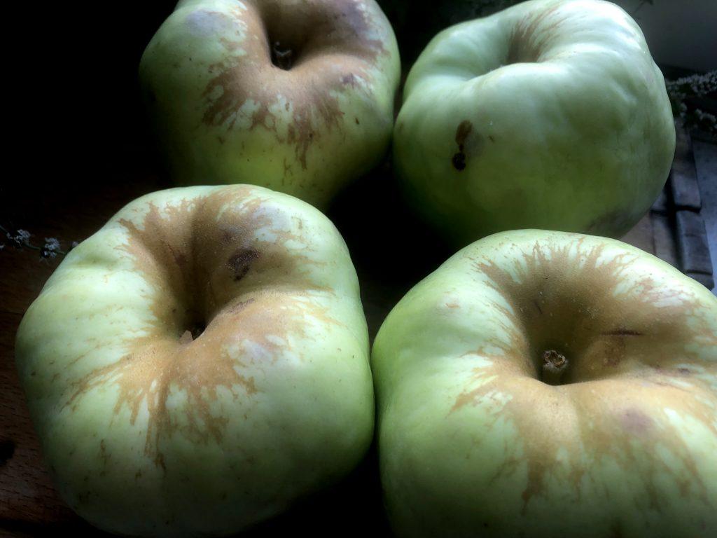Polish Apples - Antonówka
