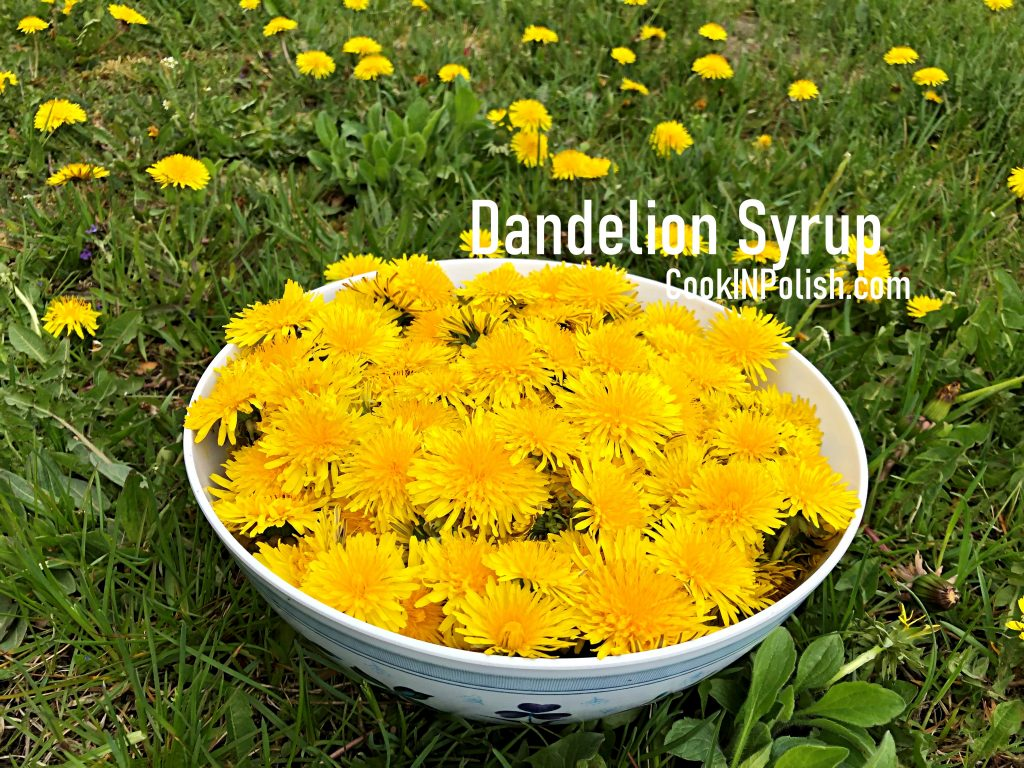 Collected Dandelion flowers